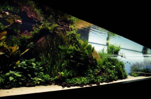 fw-aquarium-1-640x424